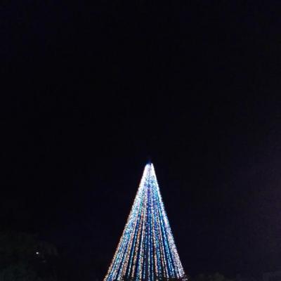 クリスマス ツリー イベント